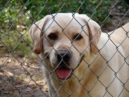 Guilt Free Indoor Dog Enclosures