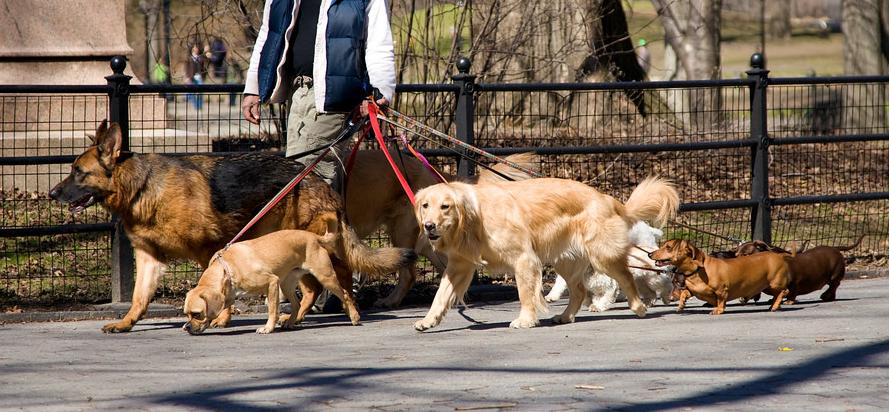 dog walking jobs no experience